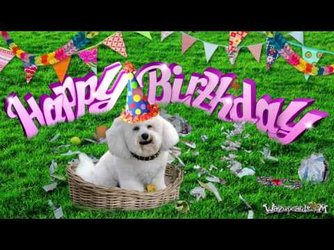 Happy Birthday Poodle For Her Funny Cat Funny Dog